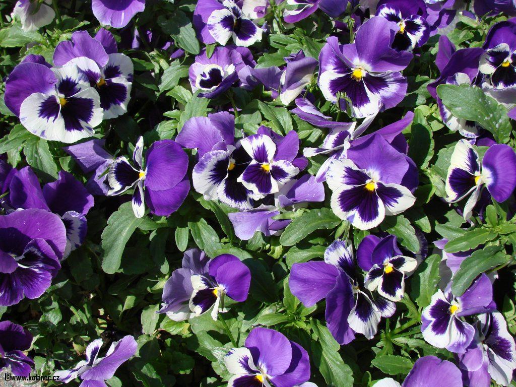 001 kytky kytičky flowers