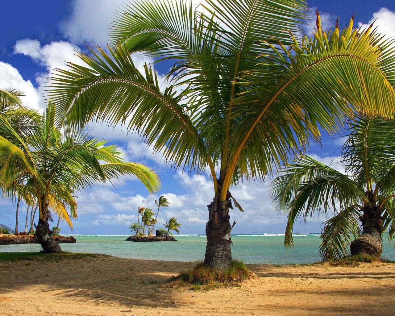 001 moře pláž palmy
