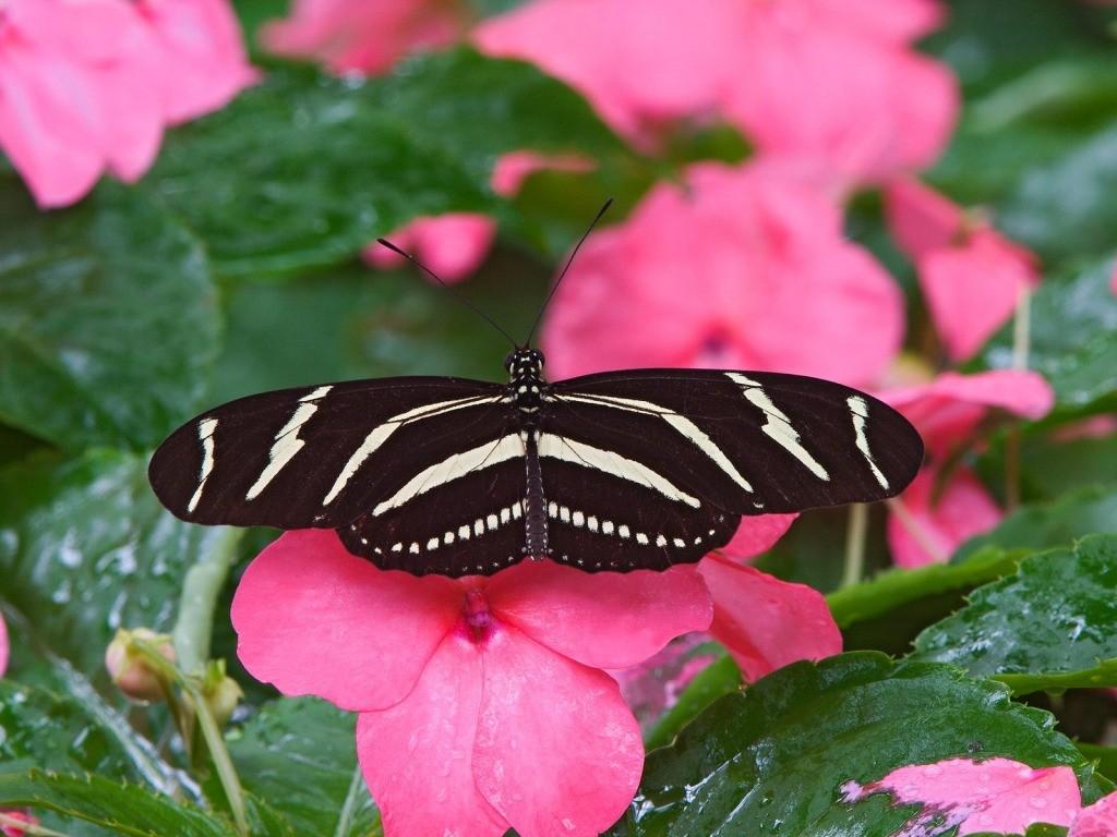 001 motýli - butterfly
