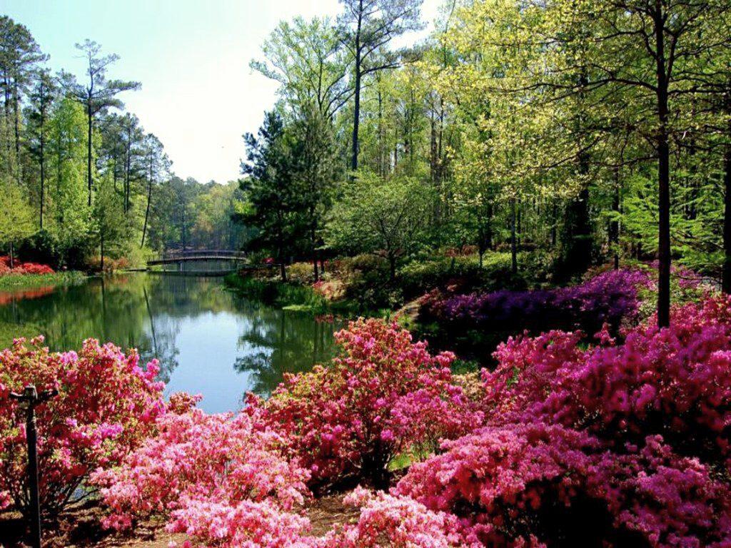 001 parky zahrady květiny