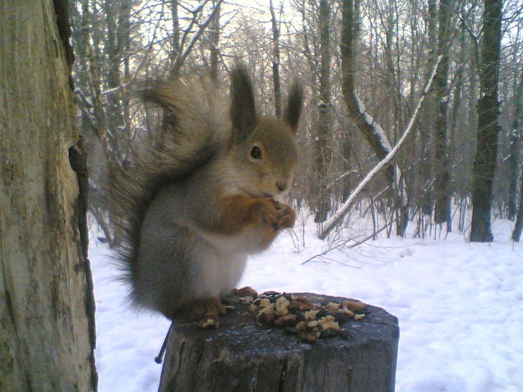 002 - veverky - zvířata
