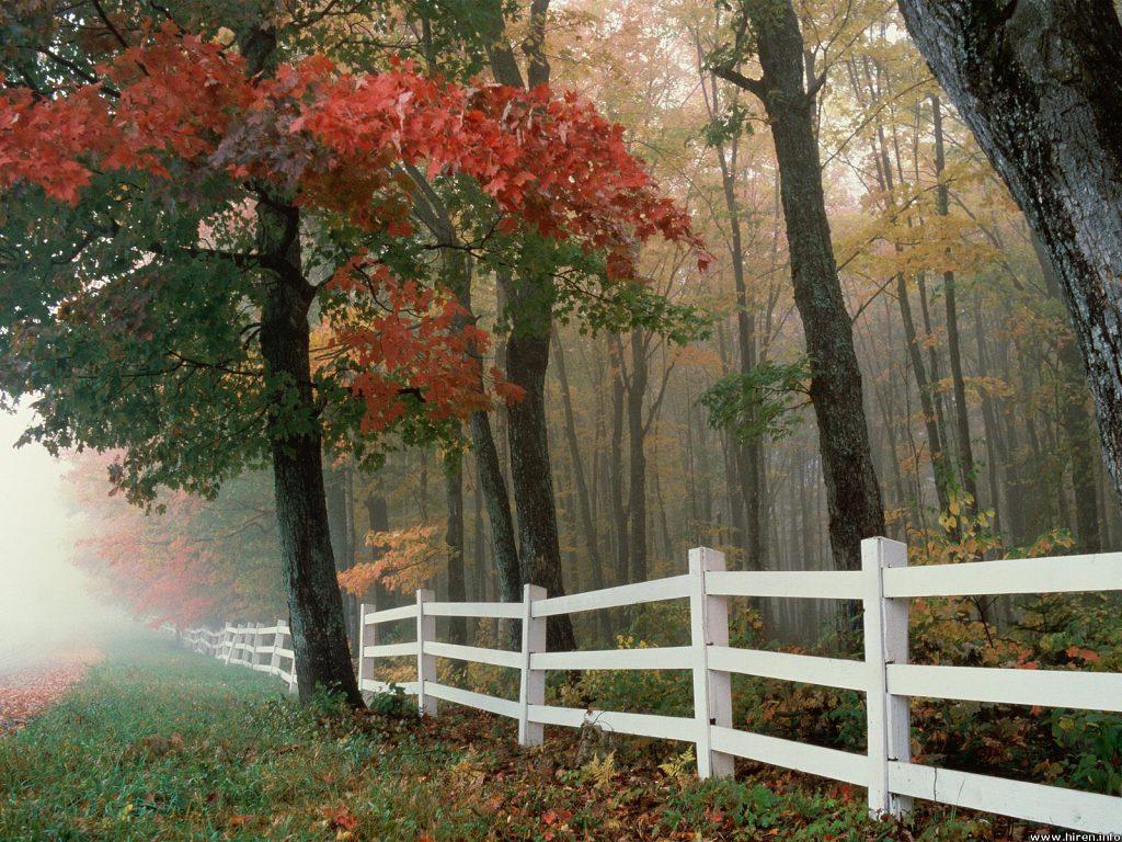 002 krajina - příroda - les - nature - landscape