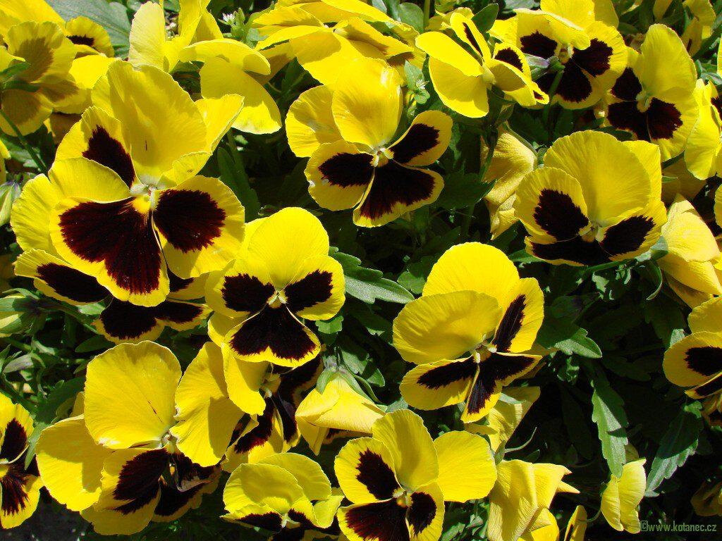 002 kytky kytičky flowers