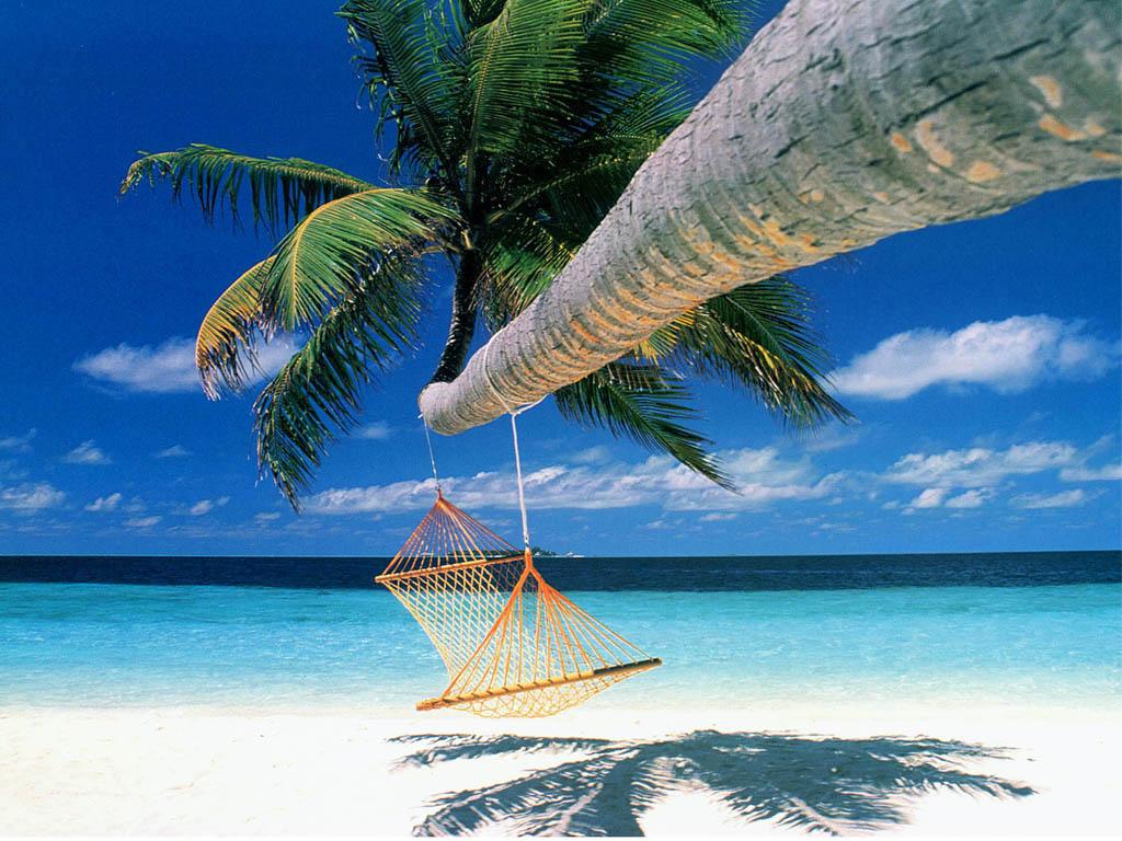 002 moře pláž palmy houpačka