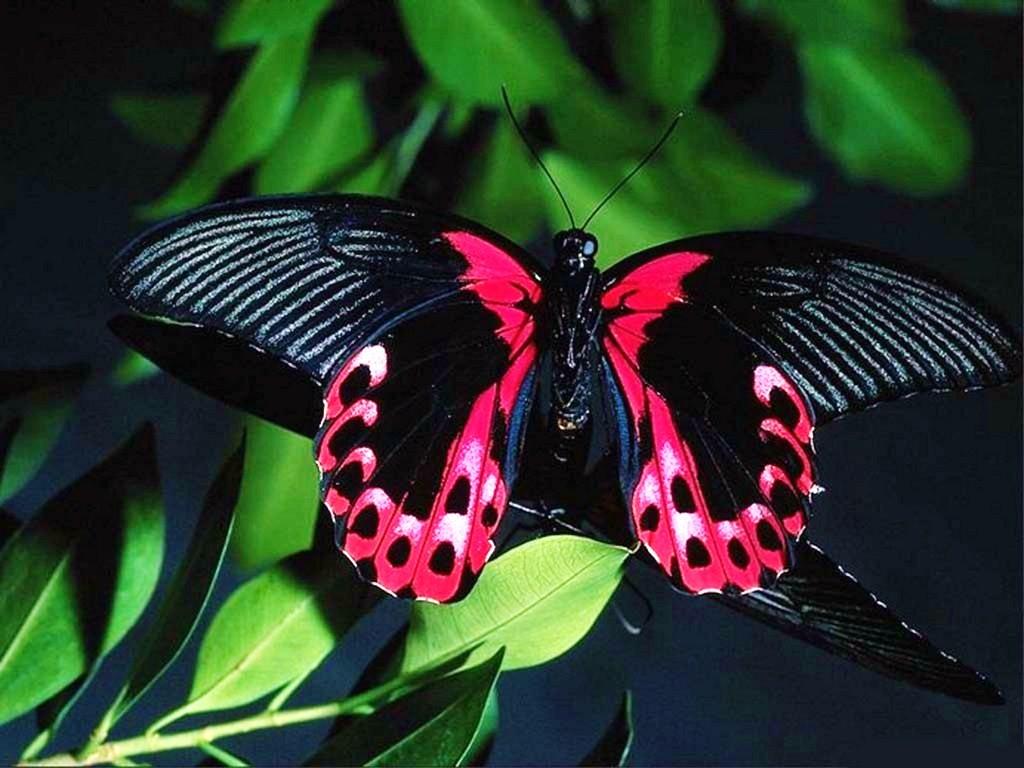 002 motýli - butterfly