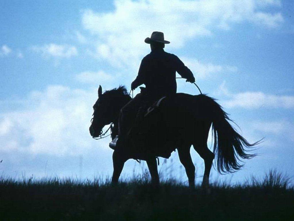 003 koně zvířata
