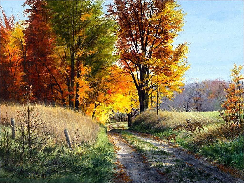 003 krajina - příroda - polní cesta - nature