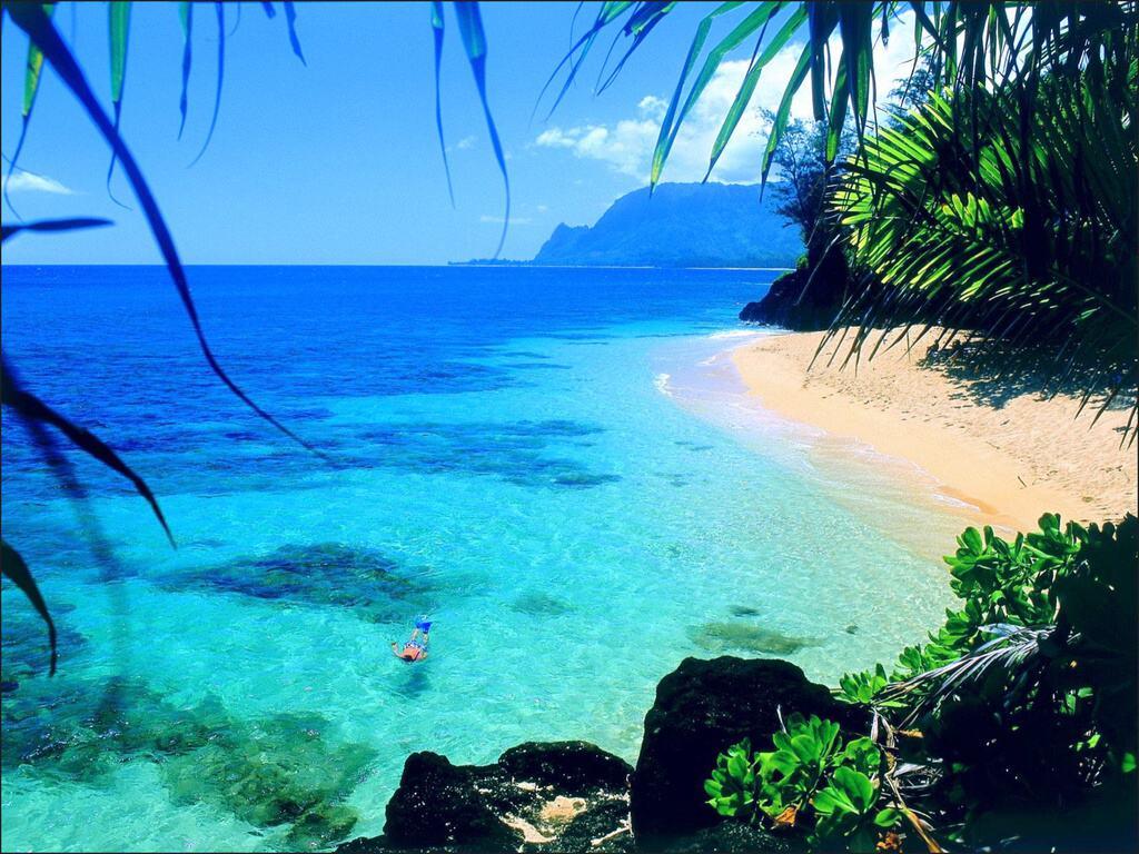003 moře pláž palmy