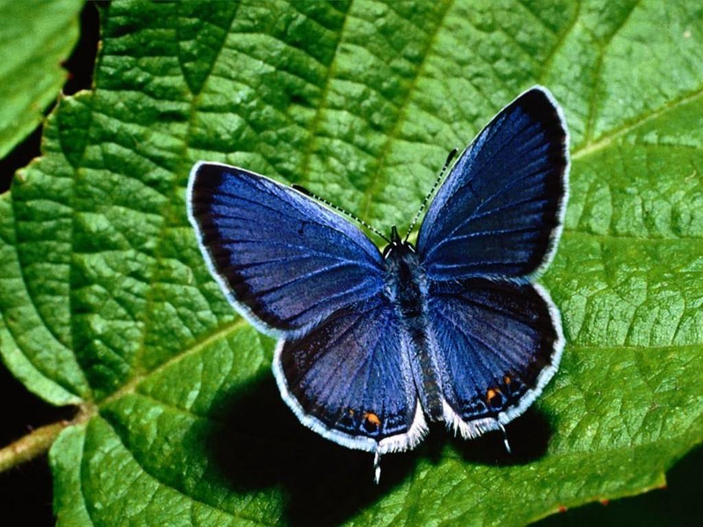 003 motýli - butterfly