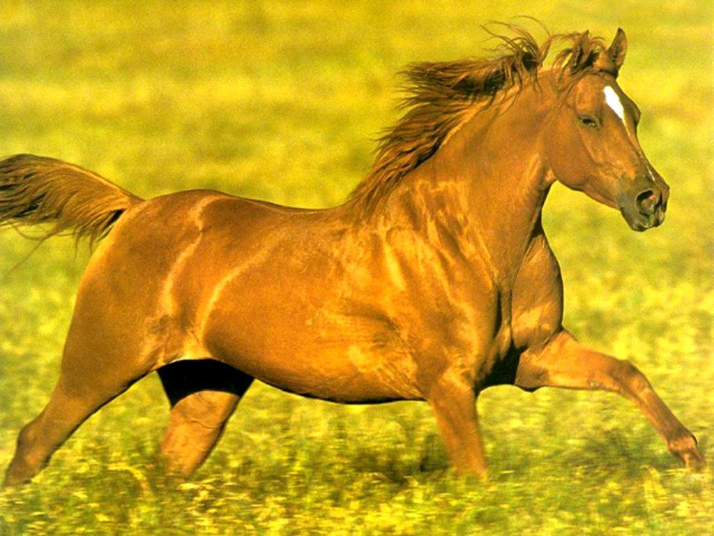 004 koně zvířata