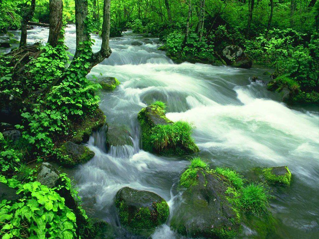 004 krajina - příroda - lesní potok - nature