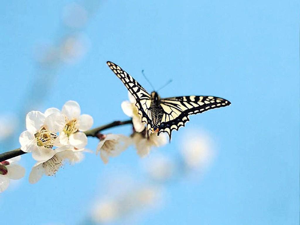 004 motýli - butterfly