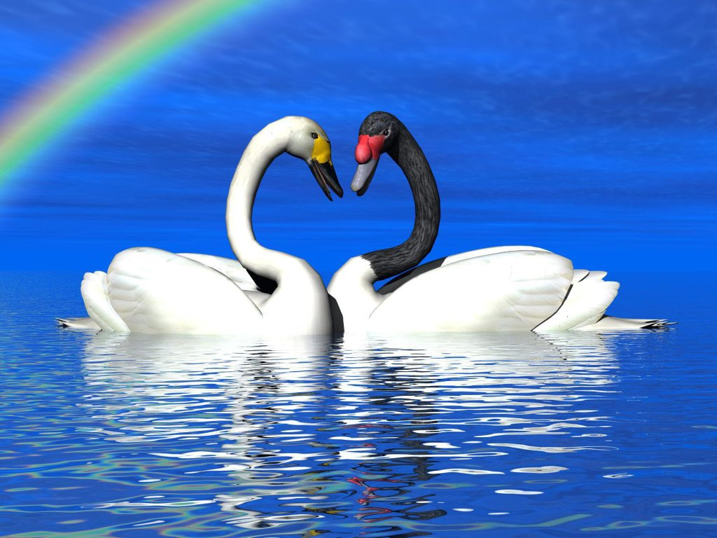 004 ptáci - labutě - birds - swans