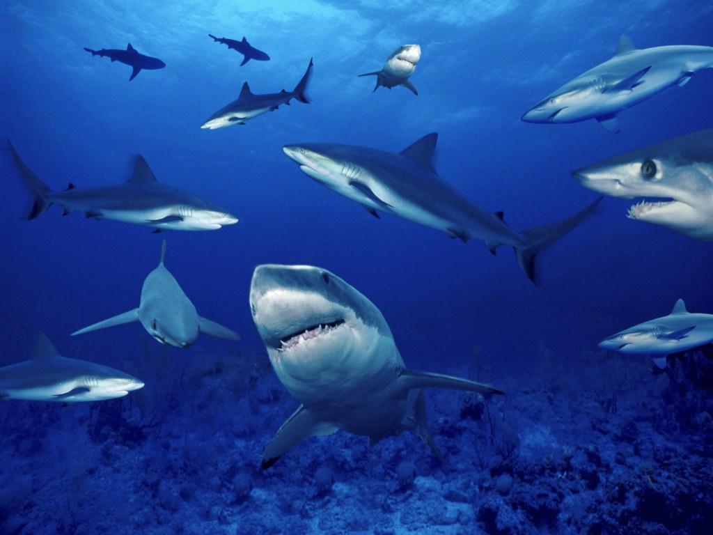 004 ryby - žraloci