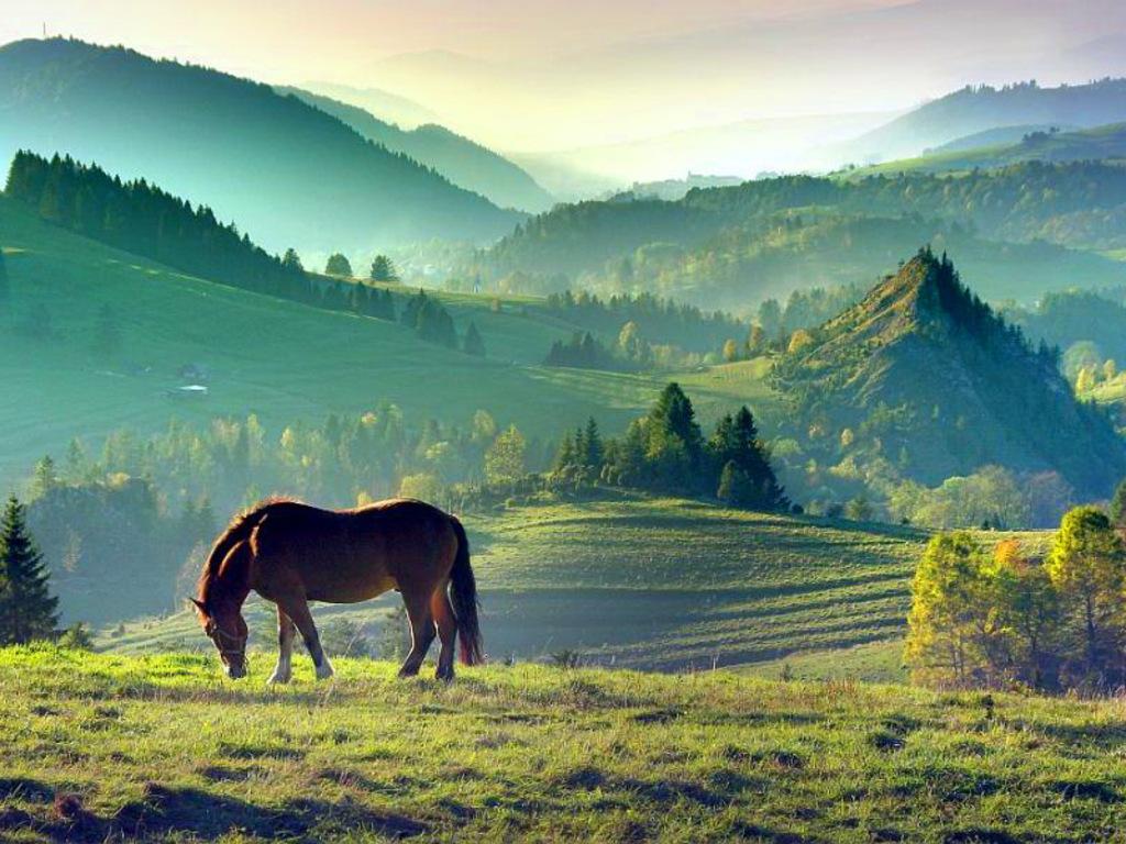 004 krajina pastvina