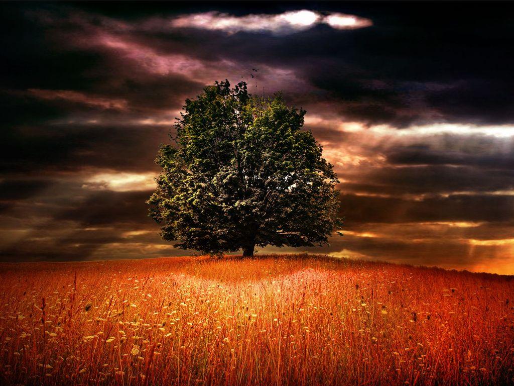 005 krajina - příroda - strom v poli - nature
