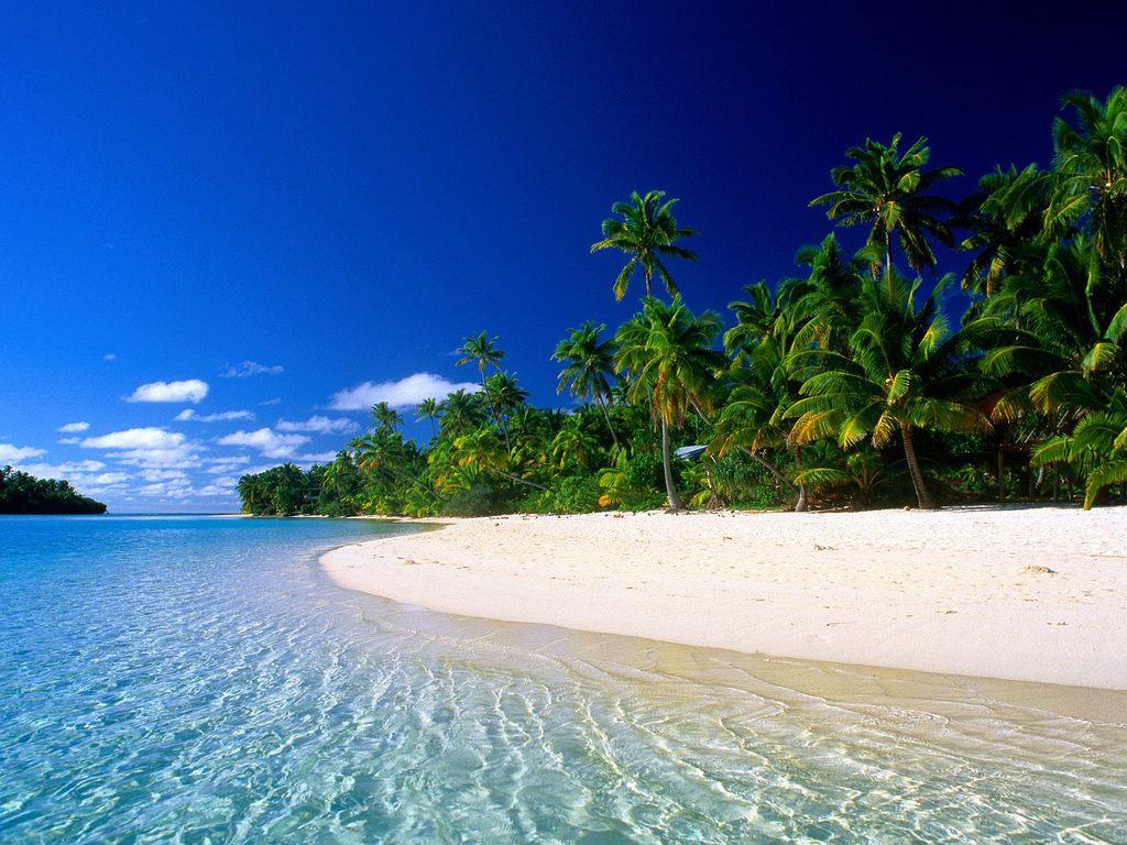 005 moře pláž palmy