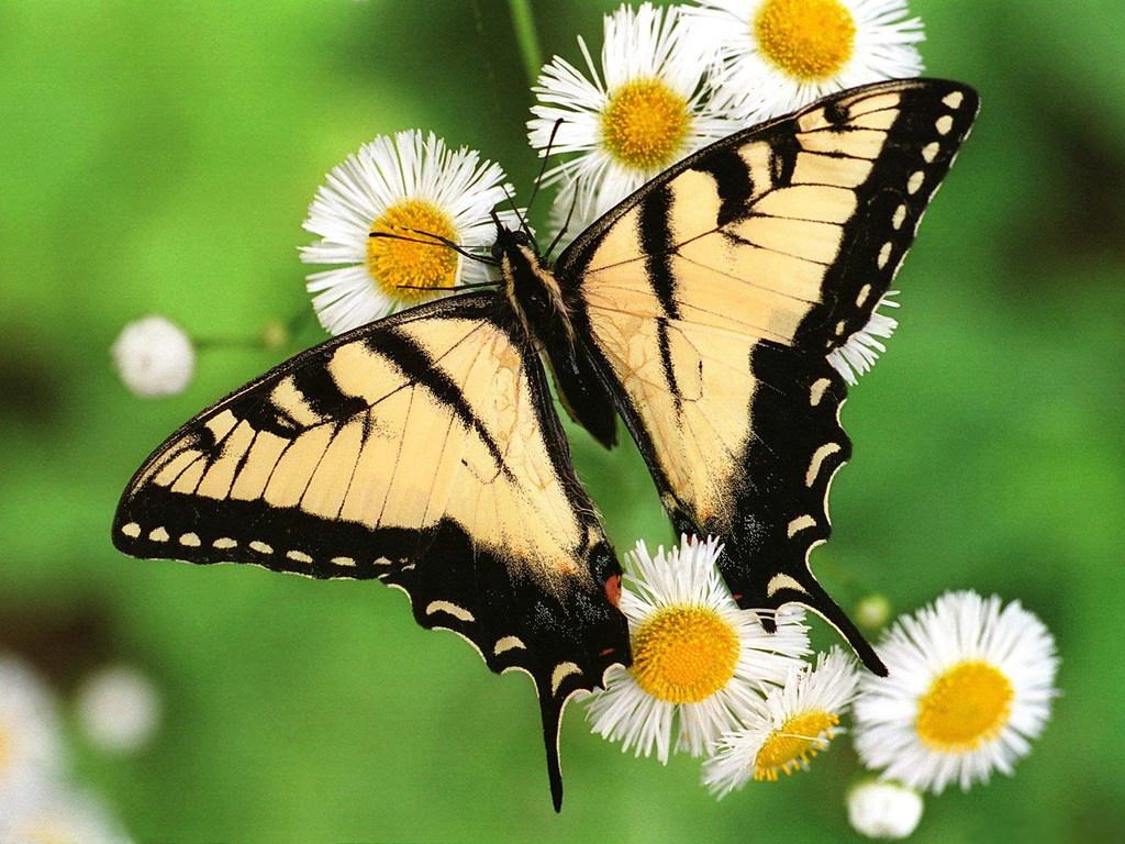 005 motýli - butterfly