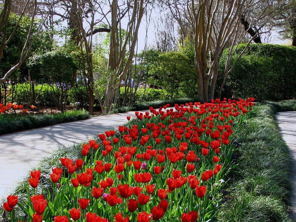 005 parky zahrady květiny