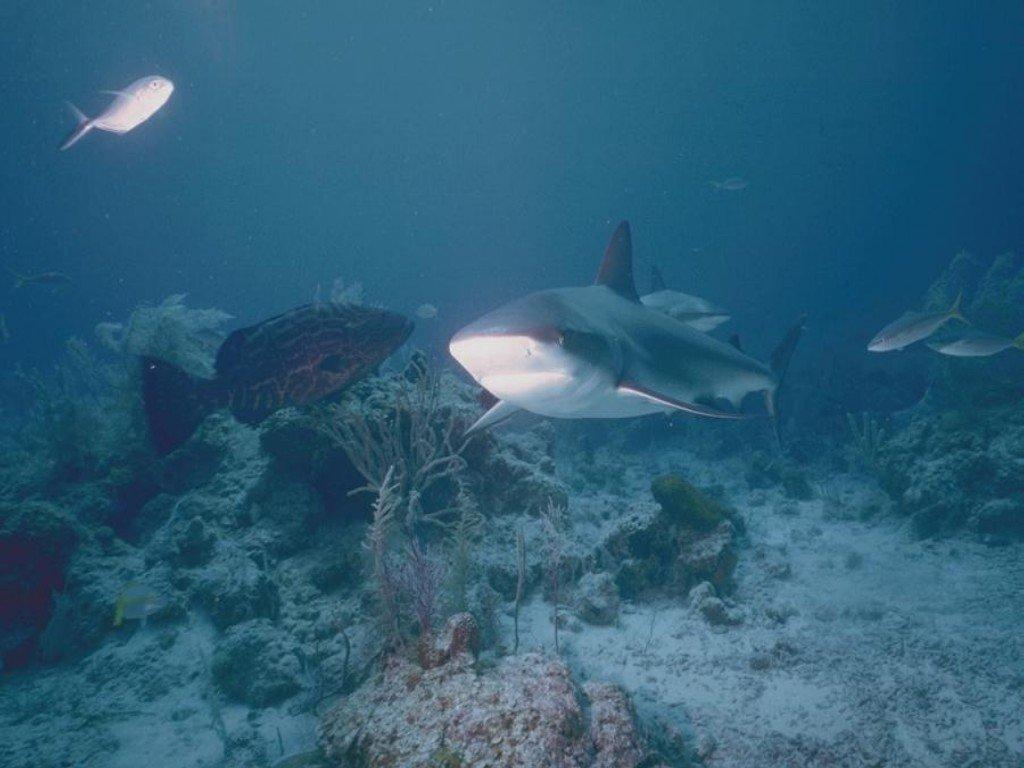 005 ryby - žralok