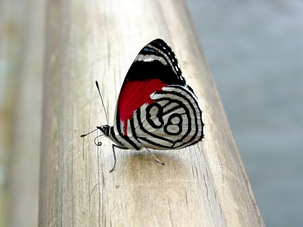 006 motýli - butterfly