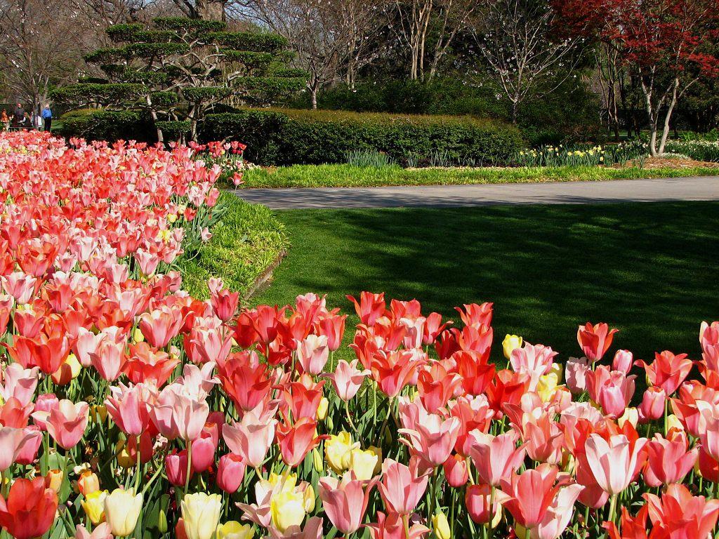 006 parky zahrady květiny