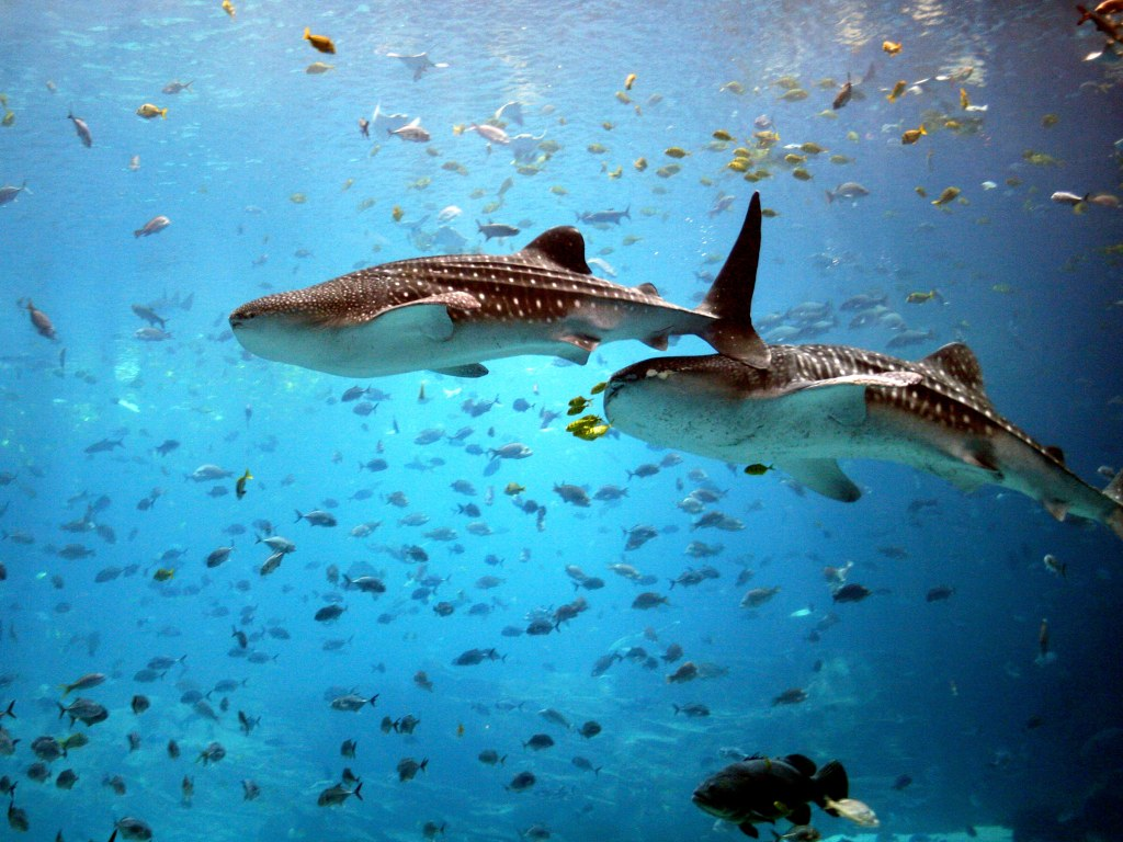 006 ryby - žraloci
