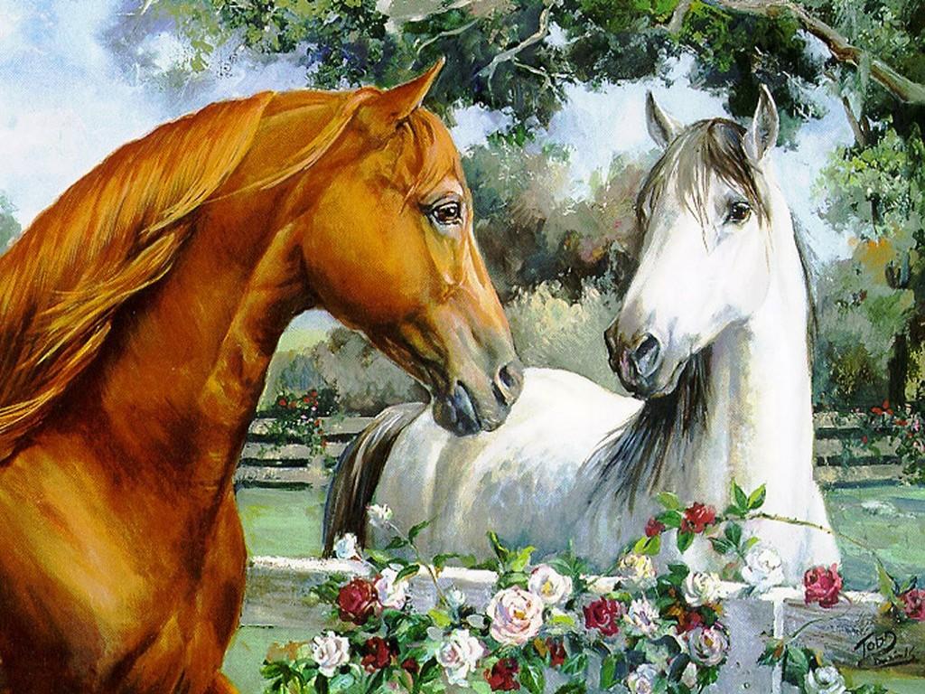 007 koně zvířata