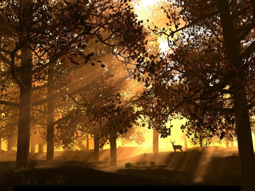 007 krajina - příroda - les - nature - landscape