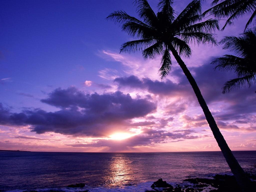 007 moře pláž palmy