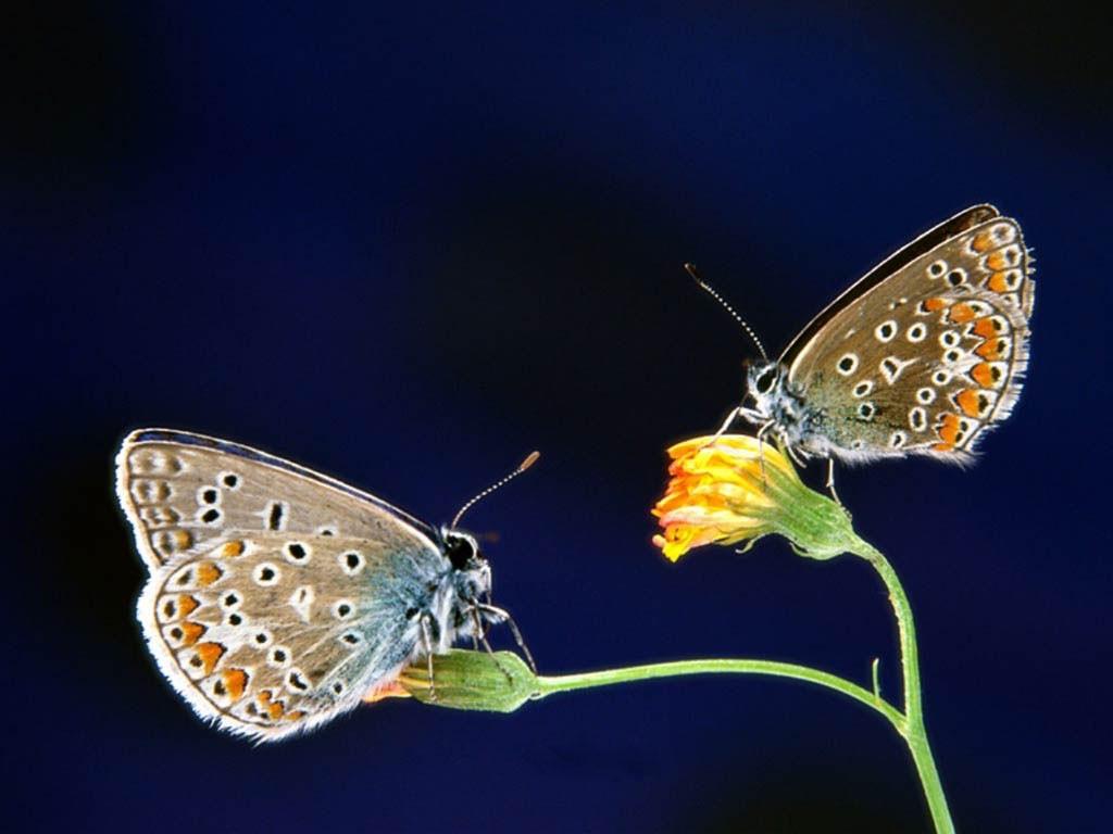 007 motýli - butterfly
