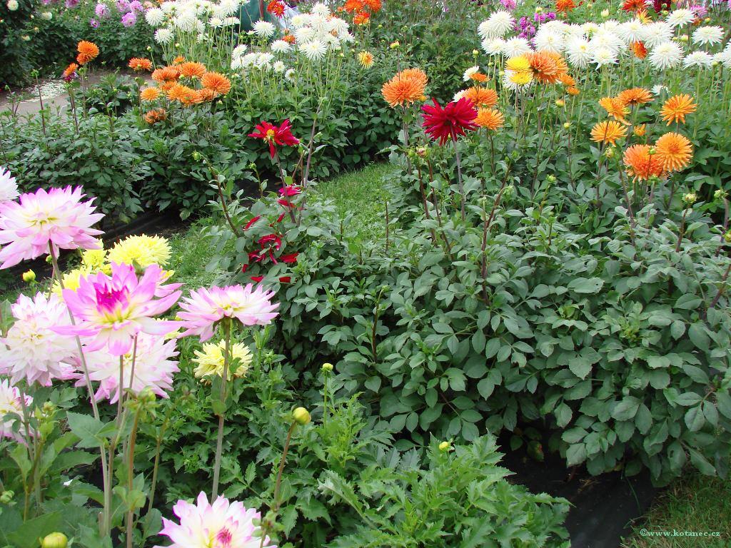 008 Zahrada Čech Litoměřice