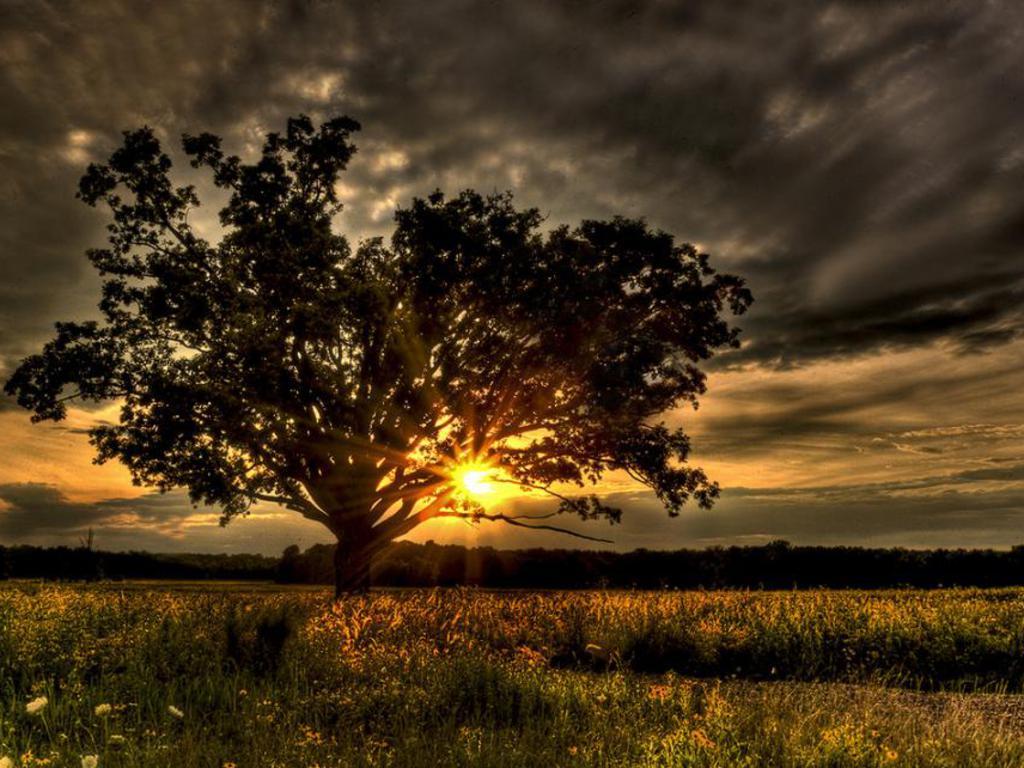 008 krajina - příroda - strom v poli - nature