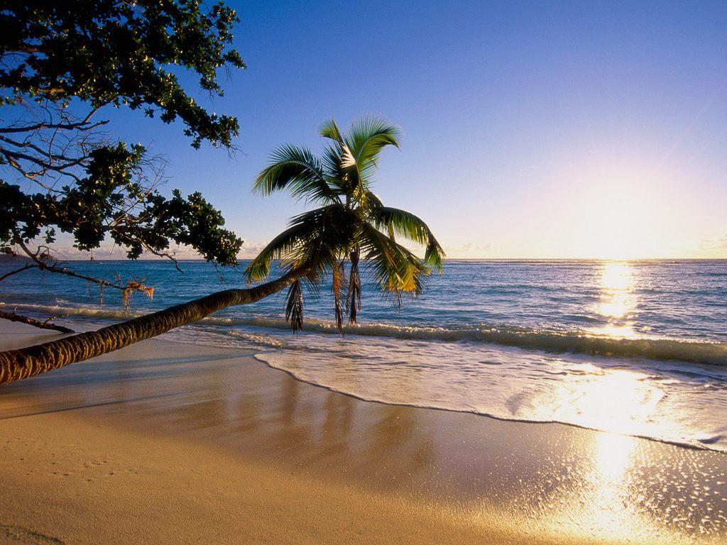 008 moře pláž palmy Seychelles