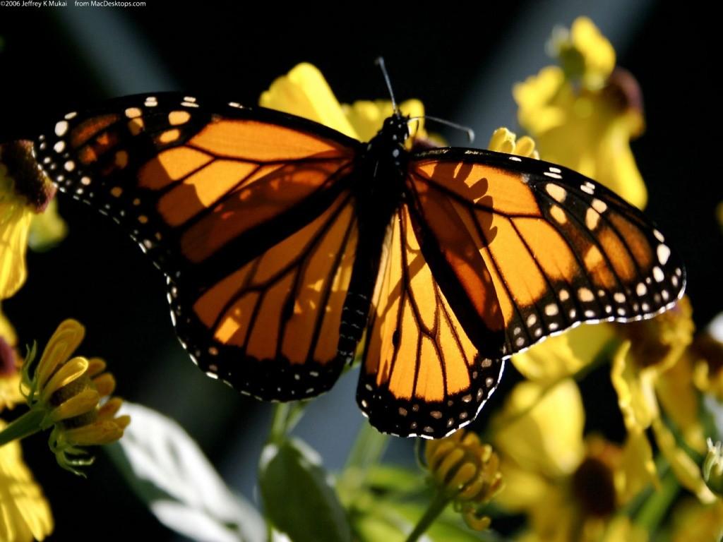 008 motýli - butterfly