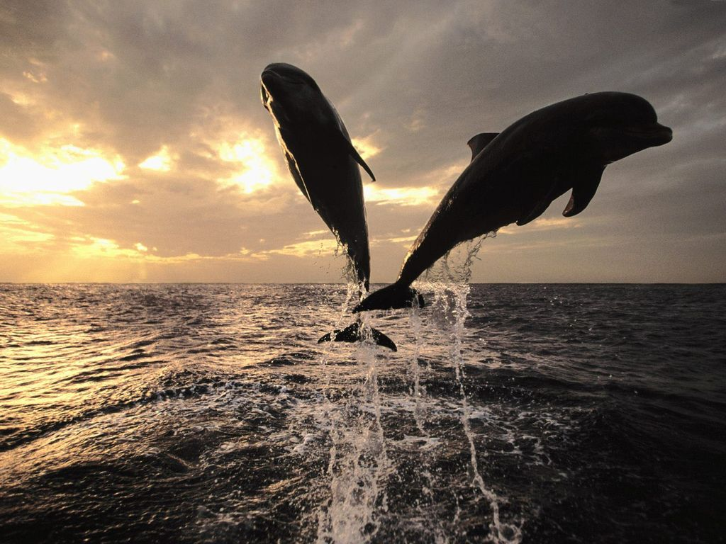 008 ryby - delfíni
