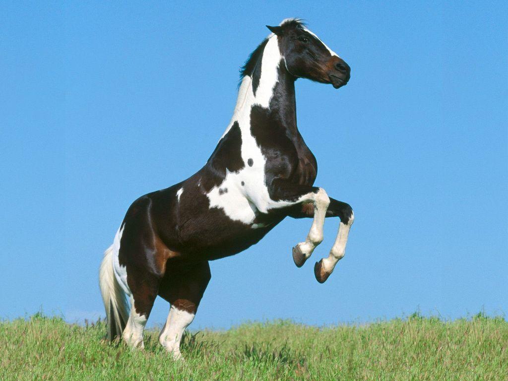 009 koně zvířata