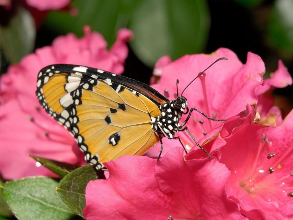 009 motýli - butterfly