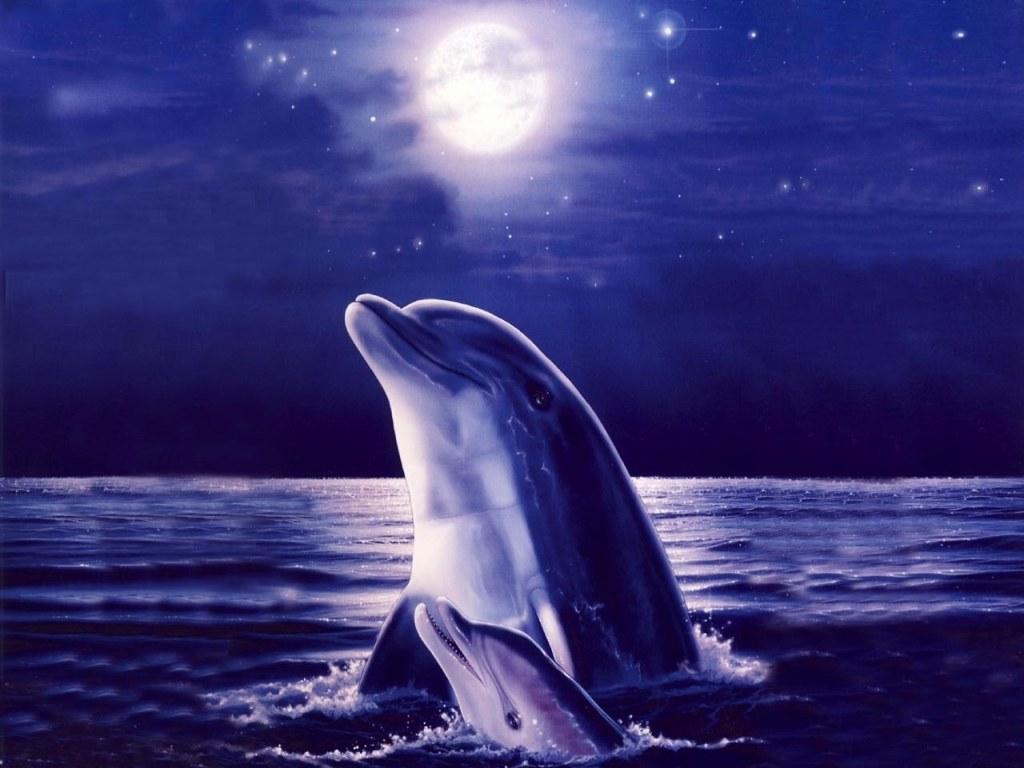 009 ryby - delfíni