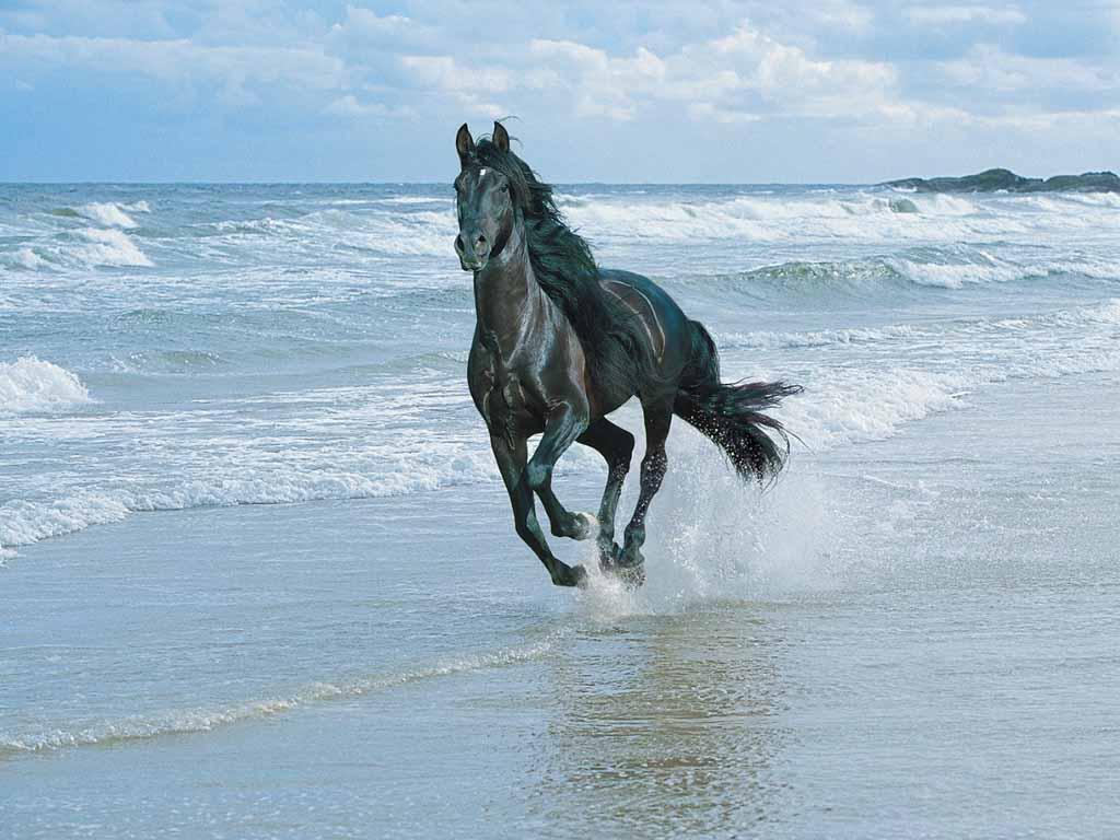 010 koně zvířata