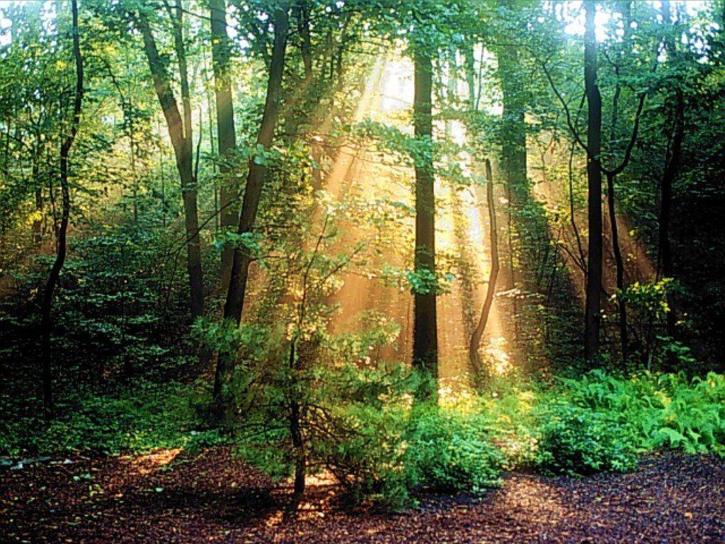 010 krajina - příroda - les - nature - landscape