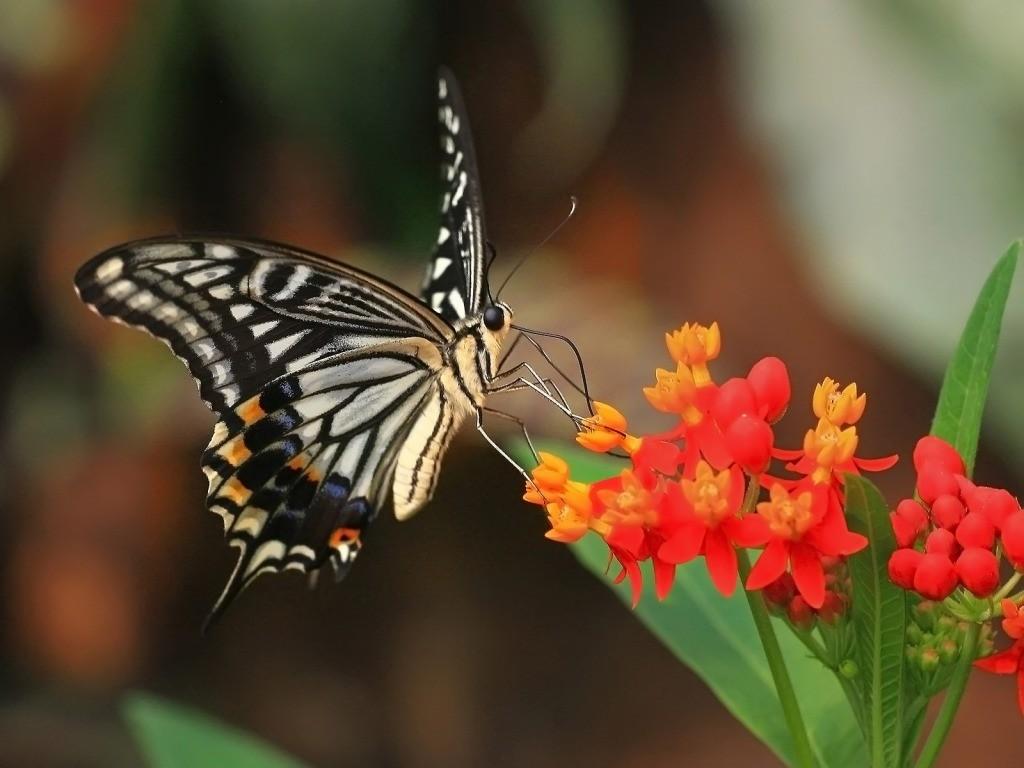 010 motýli - butterfly