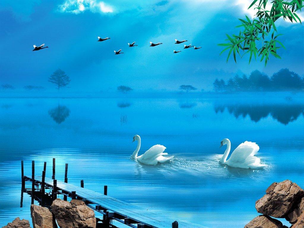 010 ptáci - labutě - birds - swans