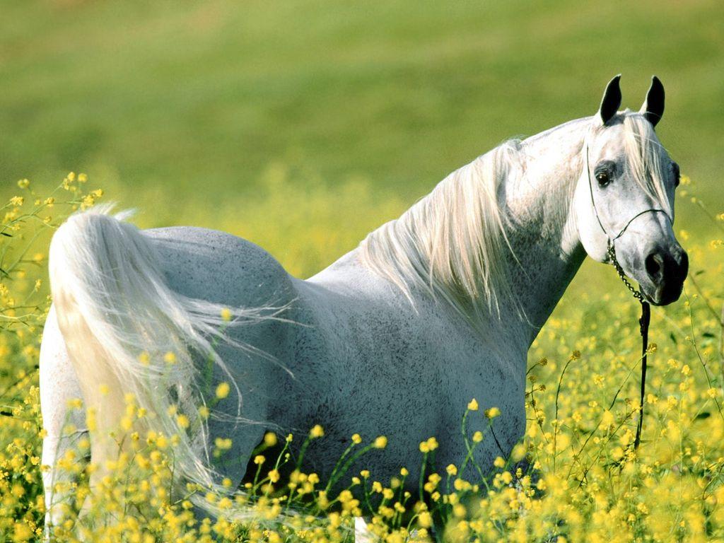 011 koně zvířata