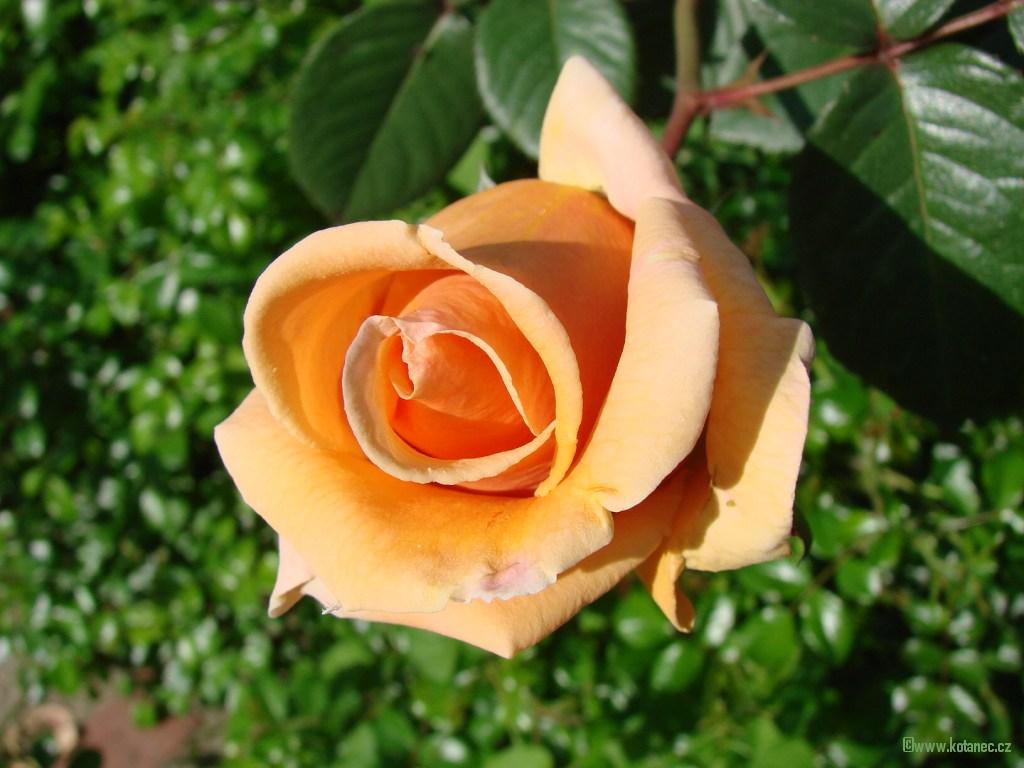 011 kytky kytičky flowers