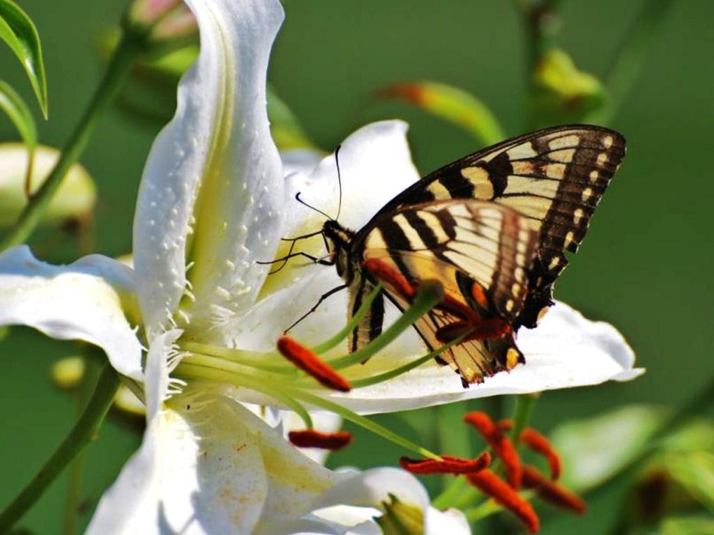 011 motýli - butterfly