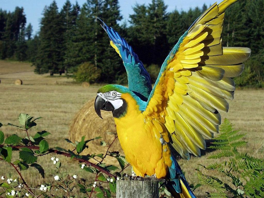 011 ptáci - papoušci - birds - parrots