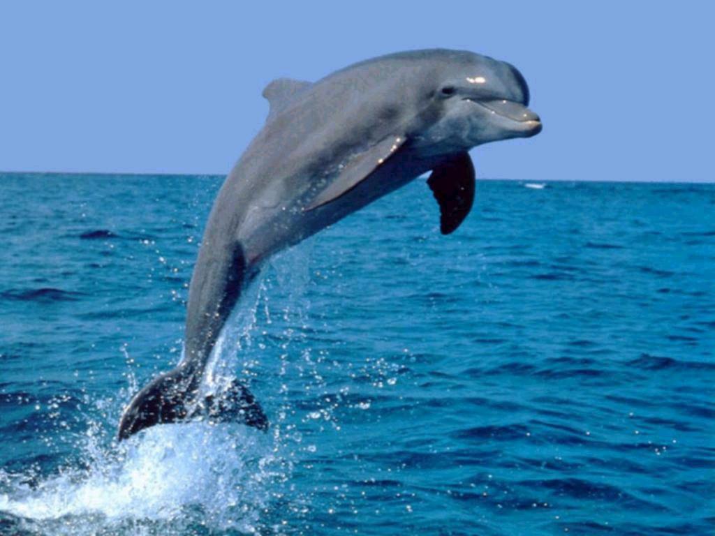 011 ryby - delfín