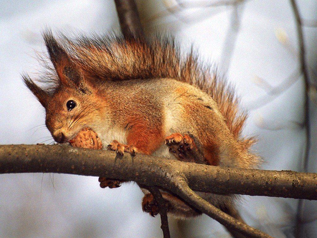 012 - veverky - zvířata