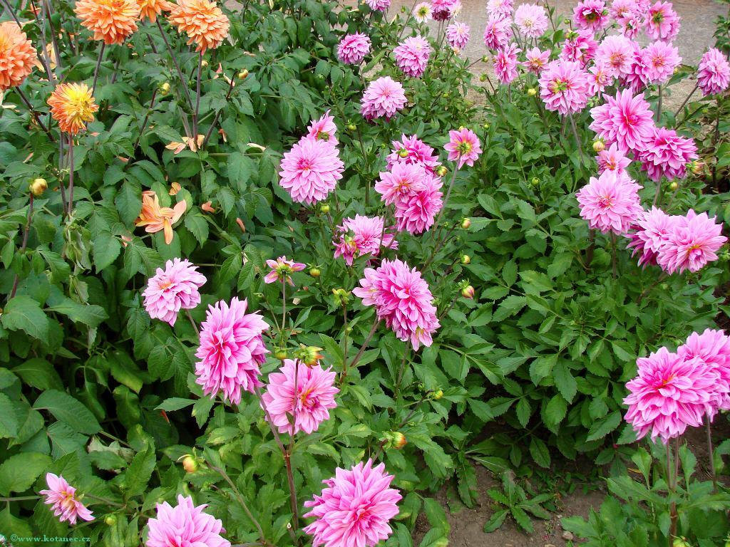 012 Zahrada Čech Litoměřice